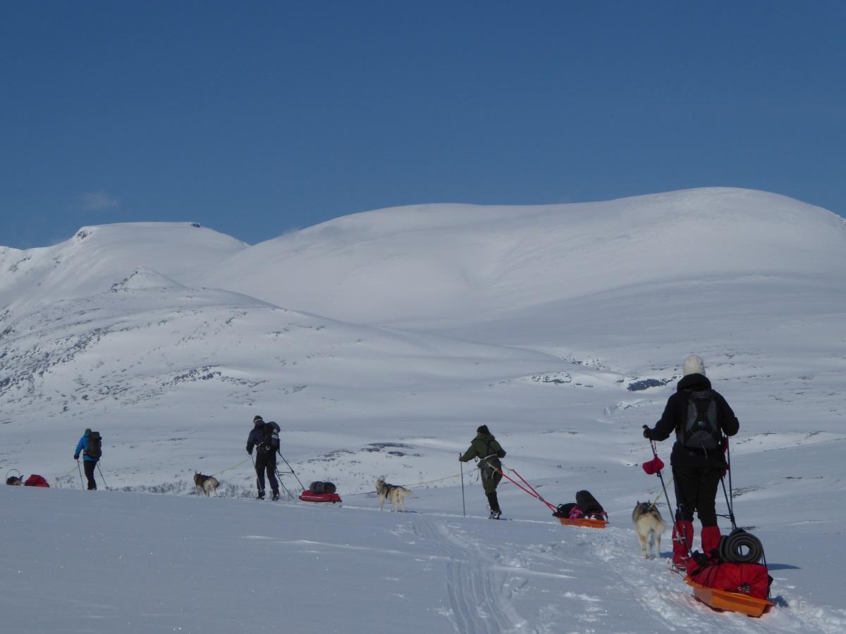 Bildegalleri - Villmarksliv i nord