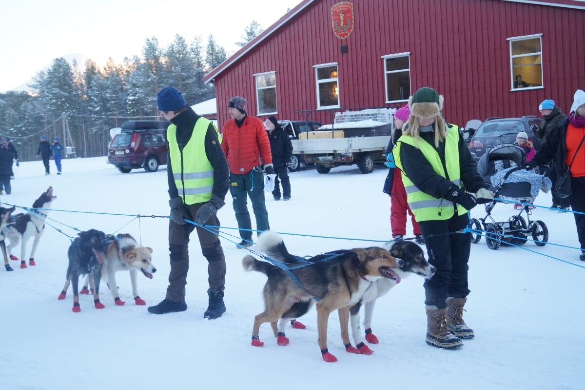Bildegalleri - Troms Quest