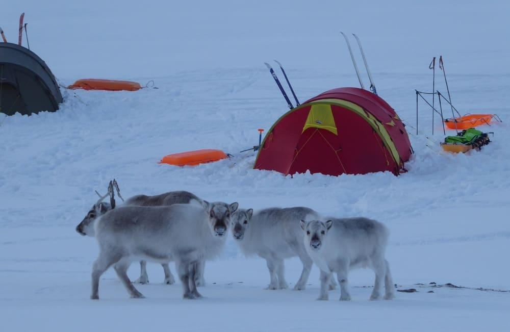Bildegalleri - Svalbard